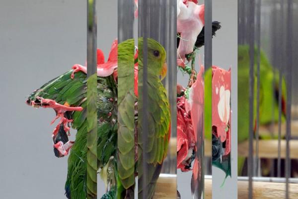 Bird Works – Museum tongerlohuys