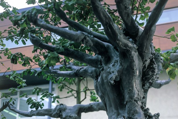 Linden Trees attached to sculpture